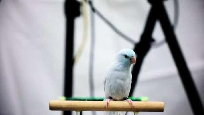 Parrot named Gary could Advance Drone Flight Capability
